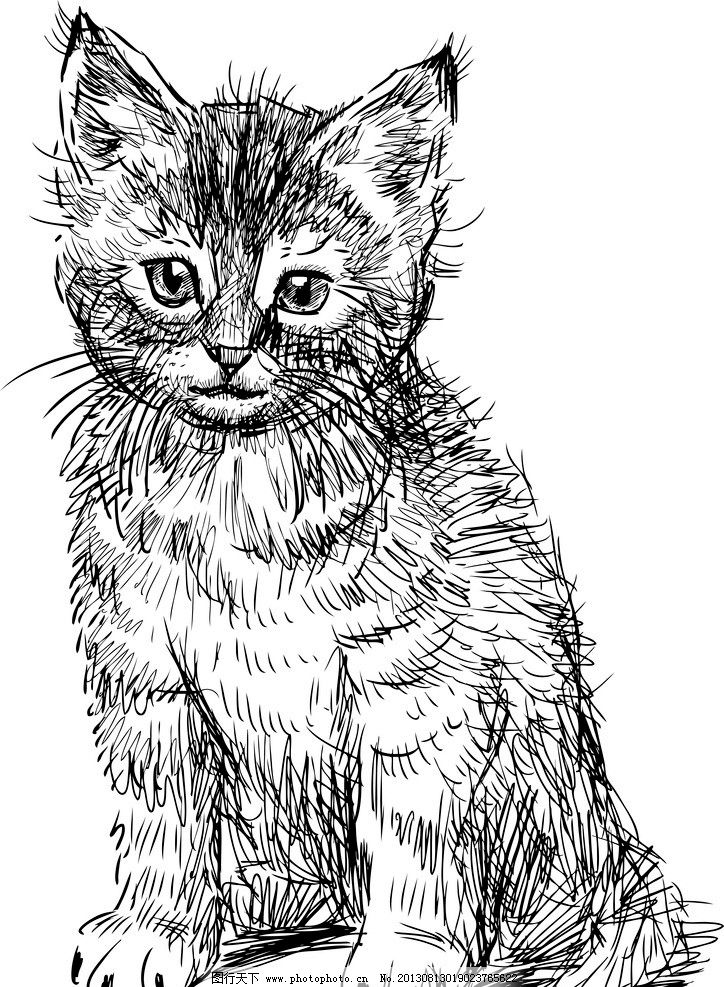 手绘动物 手绘 线描 素描
