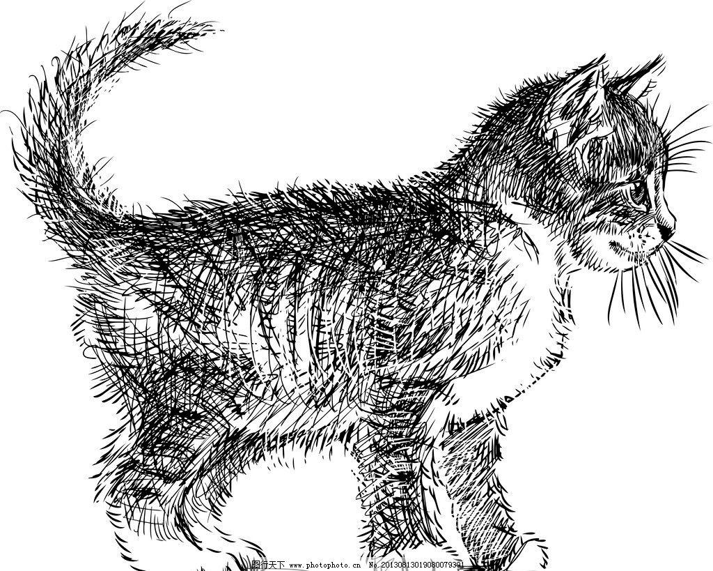 宠物猫 手绘动物 手绘 线描 素描 猫 宠物 猫咪 手绘猫 矢量 美术绘画