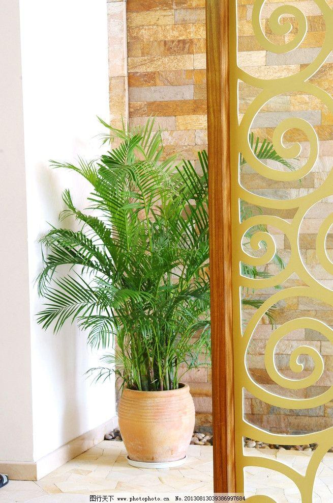 玄关 植物 室内设计图片