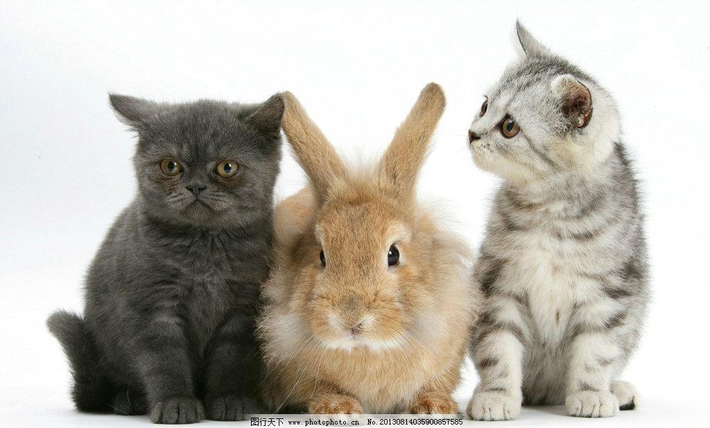 动物 小动物 可爱 兔子 兔年 生肖 小猫 摄影