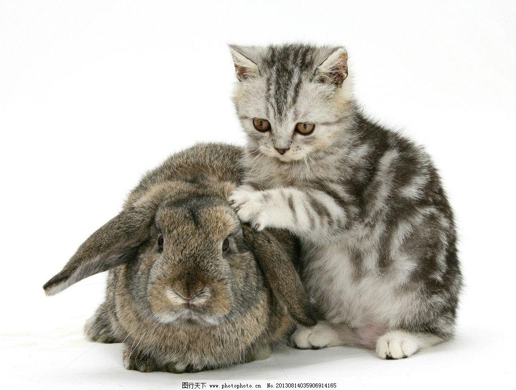 动物 小动物 可爱 兔子 兔年 生肖 一只 小猫 摄影