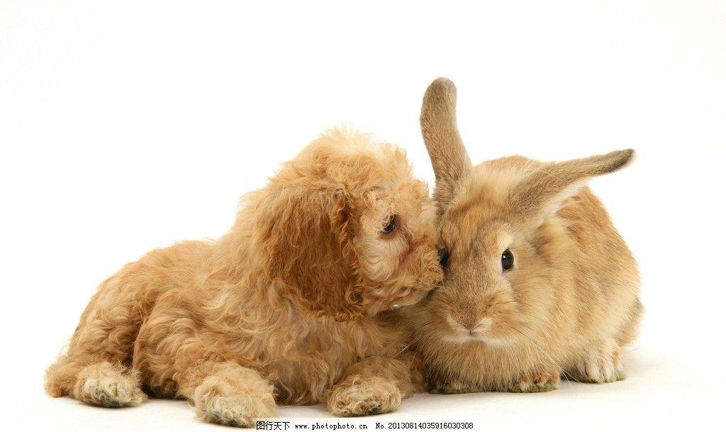 狗 兔子 小动物 可爱 小狗 摄影