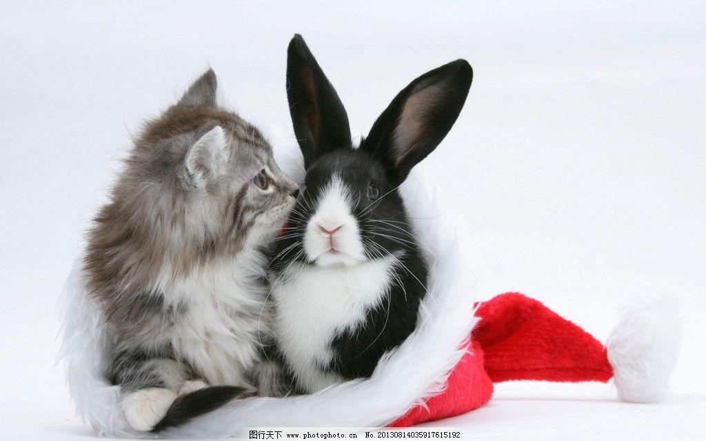 猫 兔子 小动物 动物 可爱 圣诞帽 小猫 家禽家畜 生物世界 摄影 300d