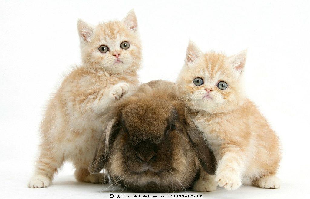 壁纸 动物 猫 猫咪 小猫 桌面 1024_658