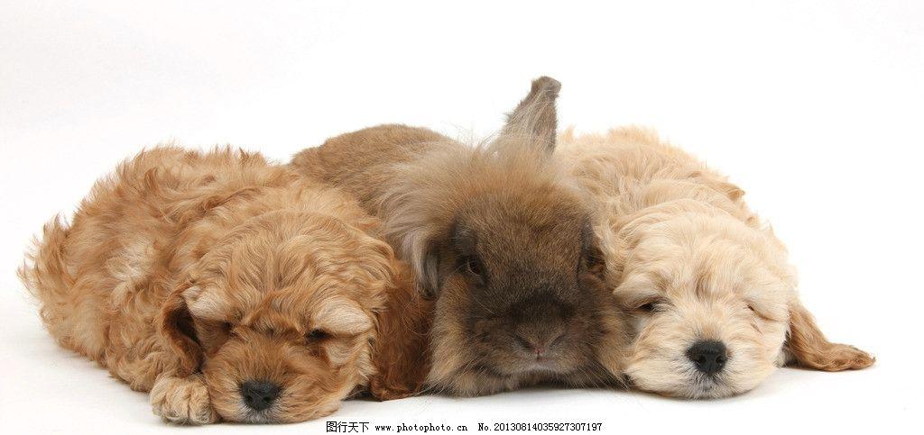 动物 小动物 可爱 兔子 兔年 生肖 小狗 家禽家畜 生物世界 摄影 300