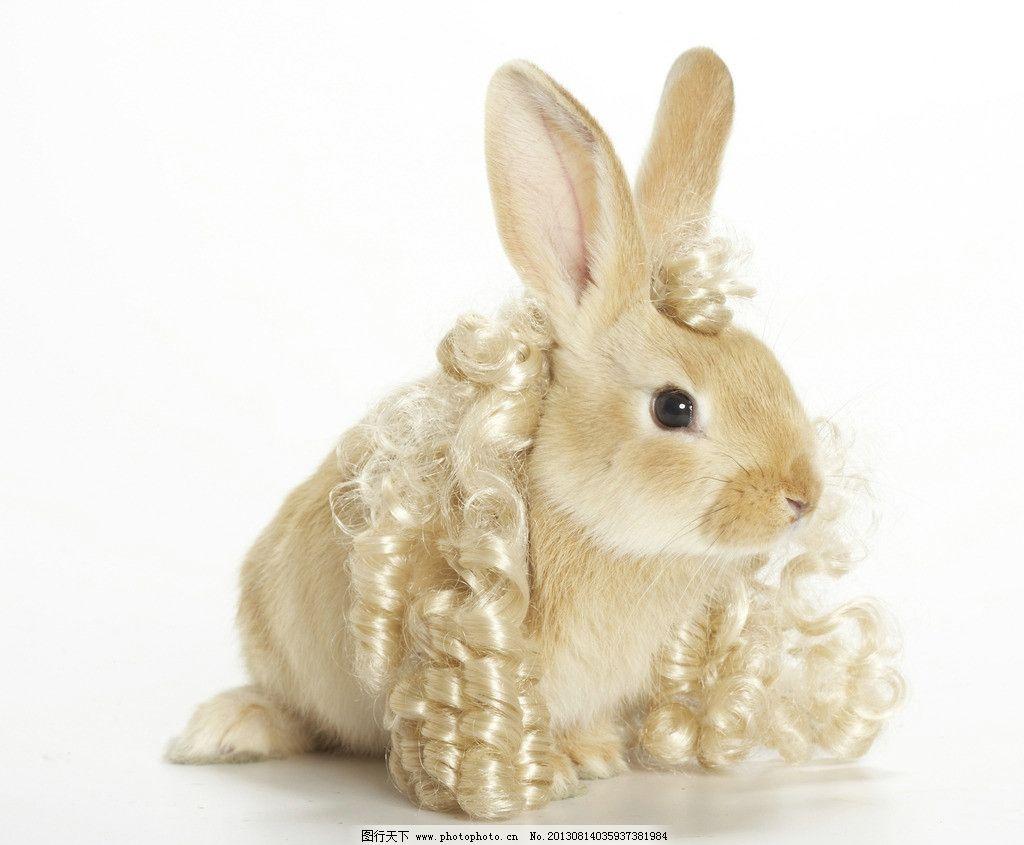 兔子 小动物 动物 可爱 兔年 生肖 家禽家畜 生物世界 摄影 300dpi jp