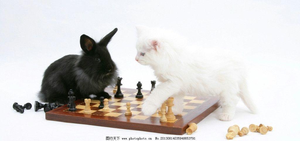 动物 小动物 可爱 兔子 兔年 生肖 小猫 下棋 摄影