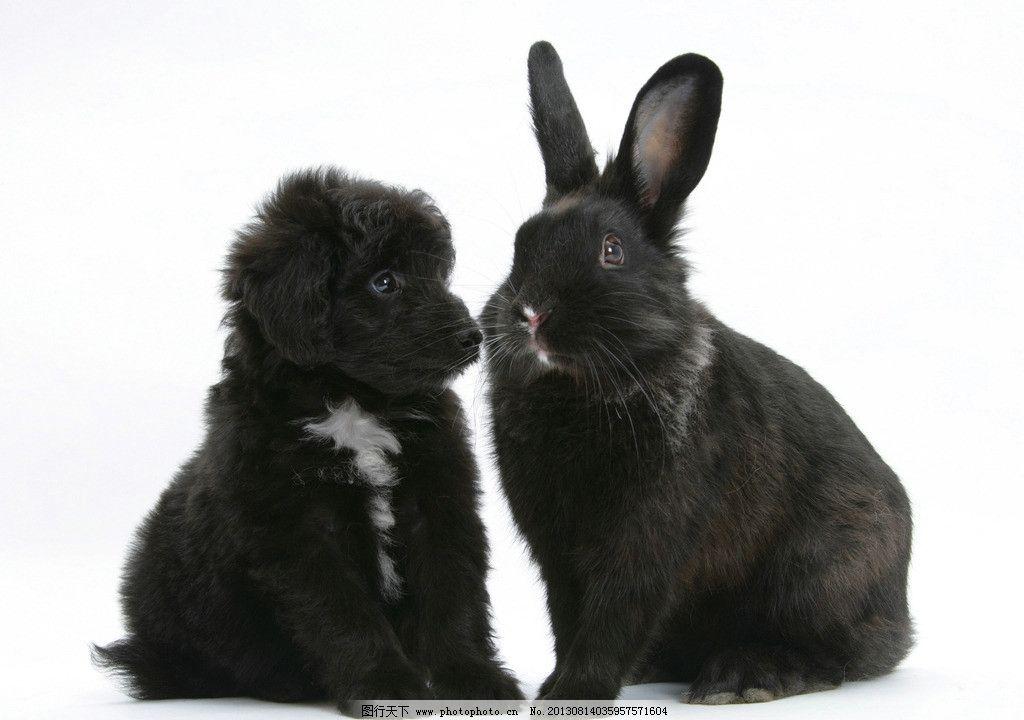动物 小动物 可爱 兔子 兔年 生肖 小狗 摄影