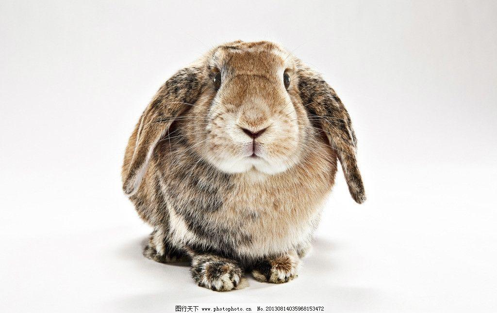 兔子 小动物 可爱 兔年 生肖 一只 摄影