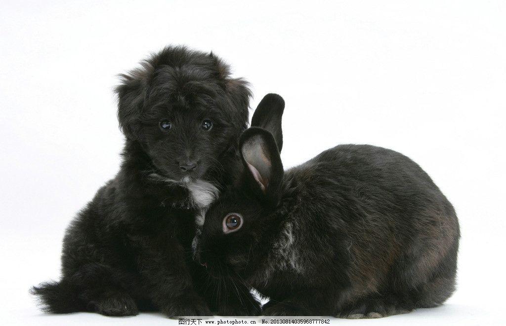狗 兔子 小动物 动物 可爱 黑色 小狗 家禽家畜 生物世界 摄影 300dpi