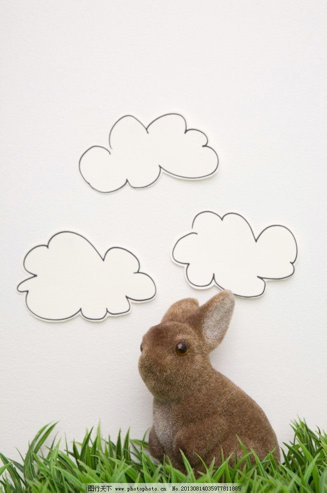 兔子 小动物 动物 可爱