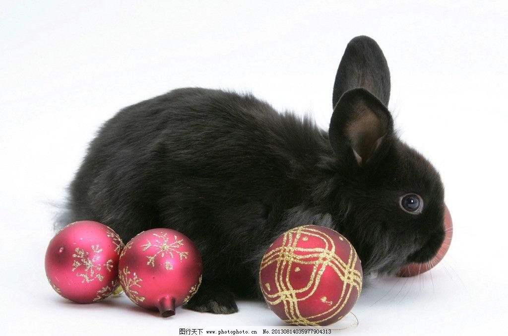 兔子 小动物 可爱 兔年 生肖 摄影
