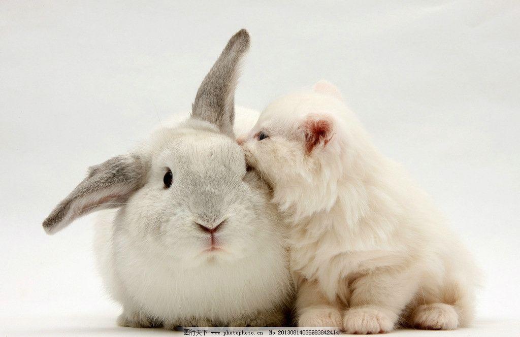 动物 小动物 可爱 兔子 兔年 生肖 小猫 家禽家畜 生物世界 摄影 300