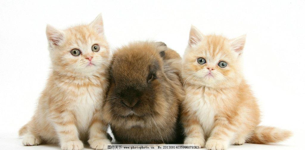 兔子图片,小动物 可爱 兔年 生肖 小猫 摄影-图行天下