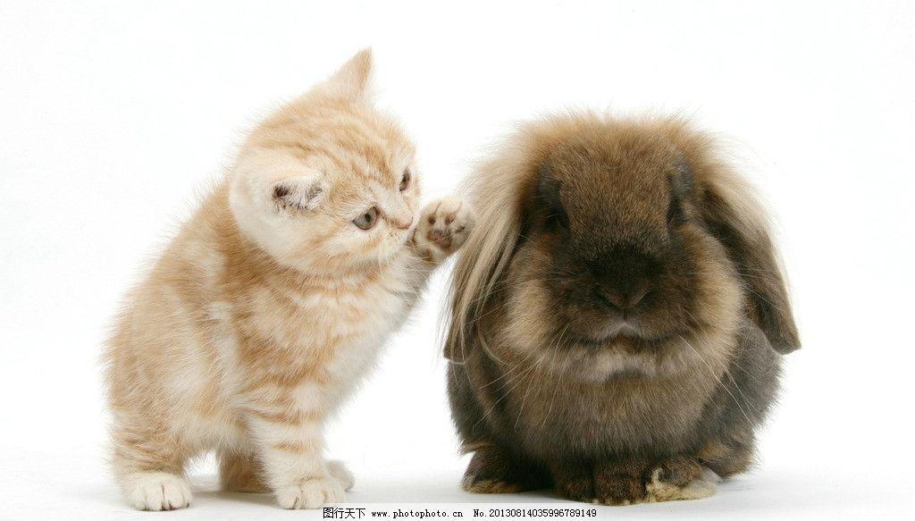 动物 小动物 可爱 兔子 兔年 生肖 小猫 家禽家畜 生物世界 摄影 300d