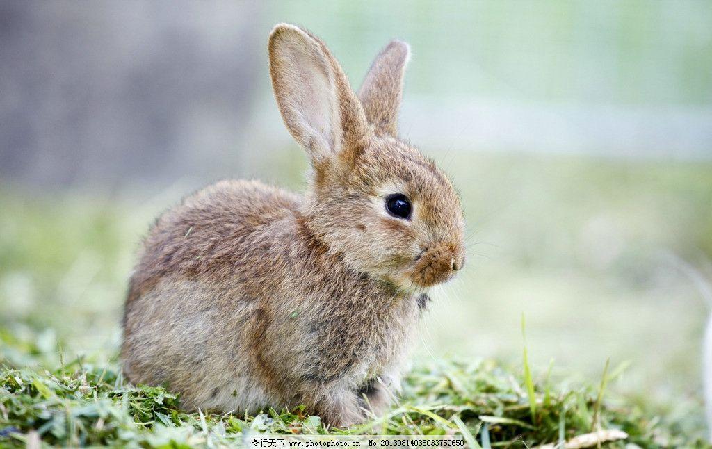 兔子 小动物 可爱 兔年 生肖 其他生物 摄影