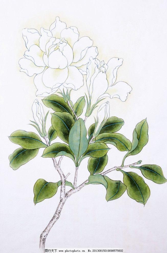 绘画花 花朵 中国画 民俗 画作 栀子花