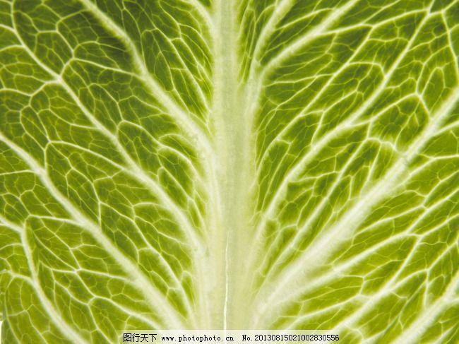 植物叶脉纹理