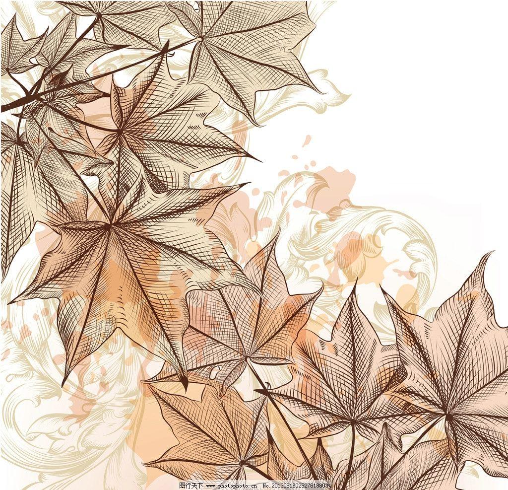 手绘枫叶树叶图片
