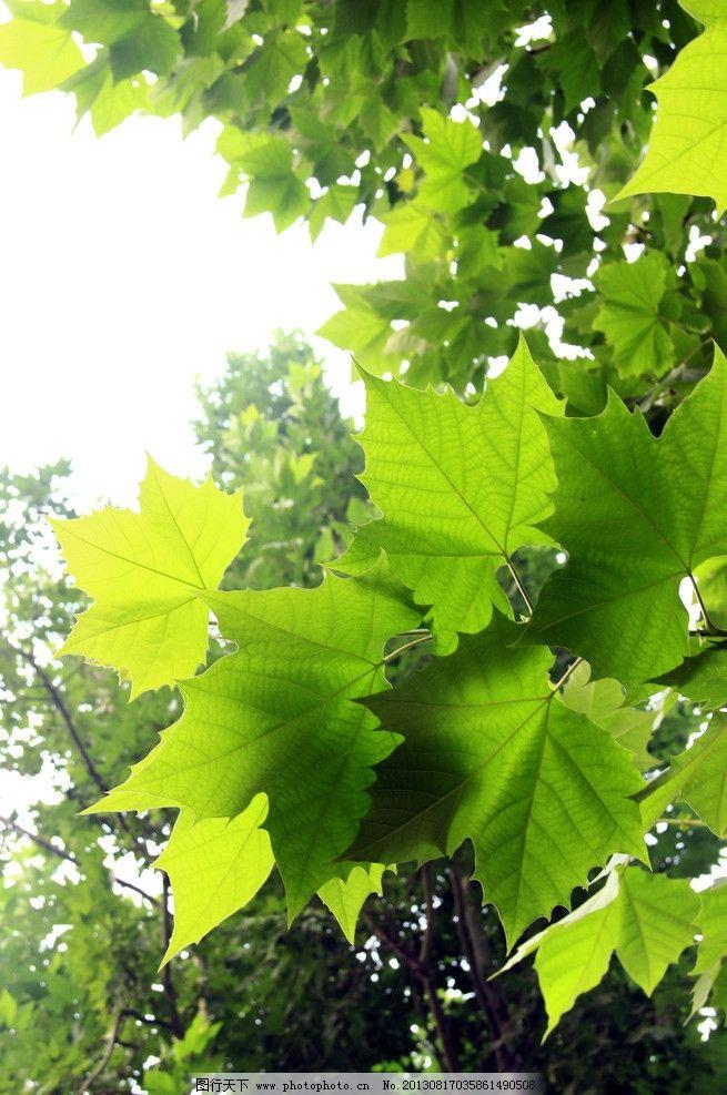 夏天绿叶图片