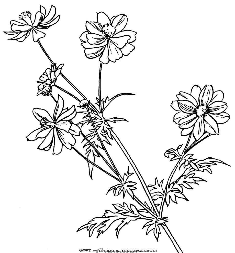 线描花卉 手绘 国外 花草 国外花草线描