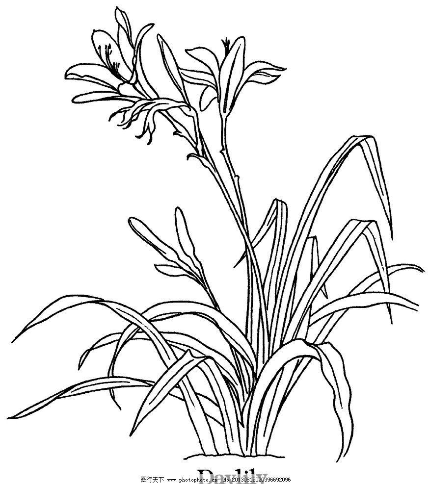 线描花卉 线描 花卉 草 黑白 手绘 国外花草线描 花边花纹 底纹边框
