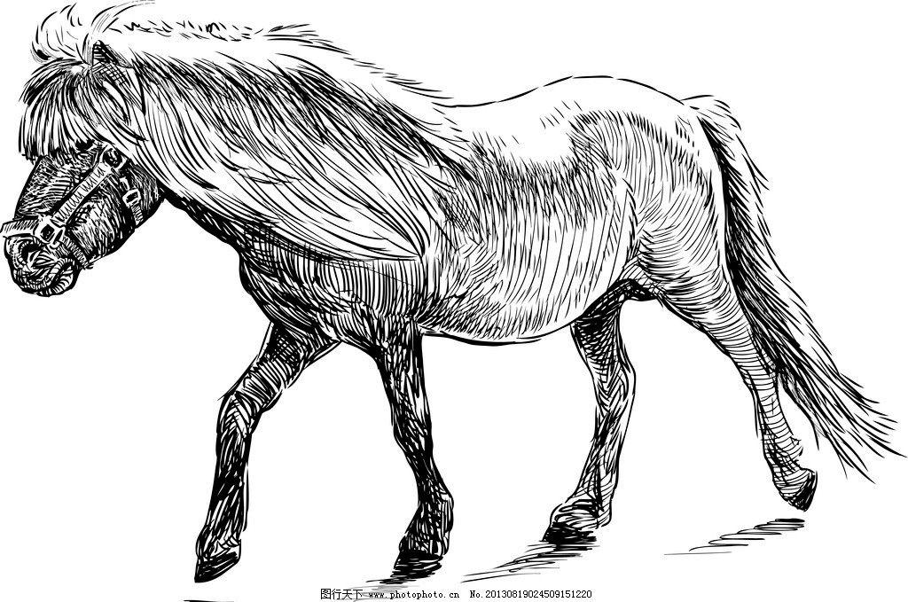 手绘素描动物 手绘 素描