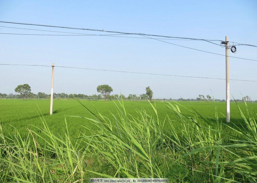 农村风光 蓝天 白云 草地 水稻 大树 田园风光 自然景观 摄影 180dpi
