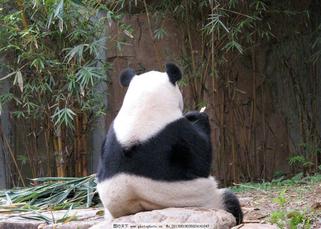 熊猫 动物 大熊猫 竹子 动物园 野生动物 生物世界 摄影 180dpi jpg