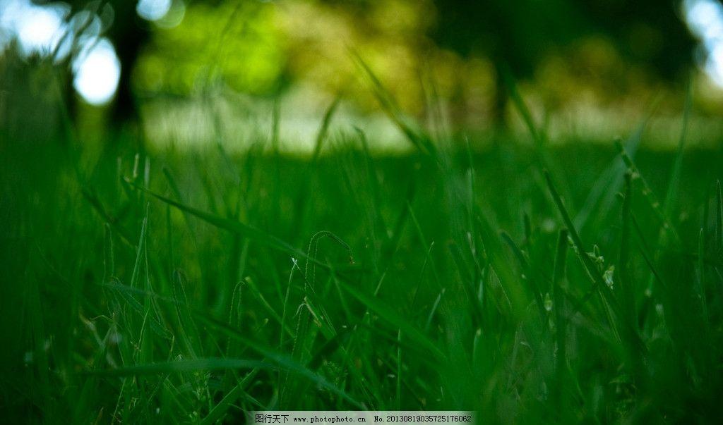 绿草大地的动物