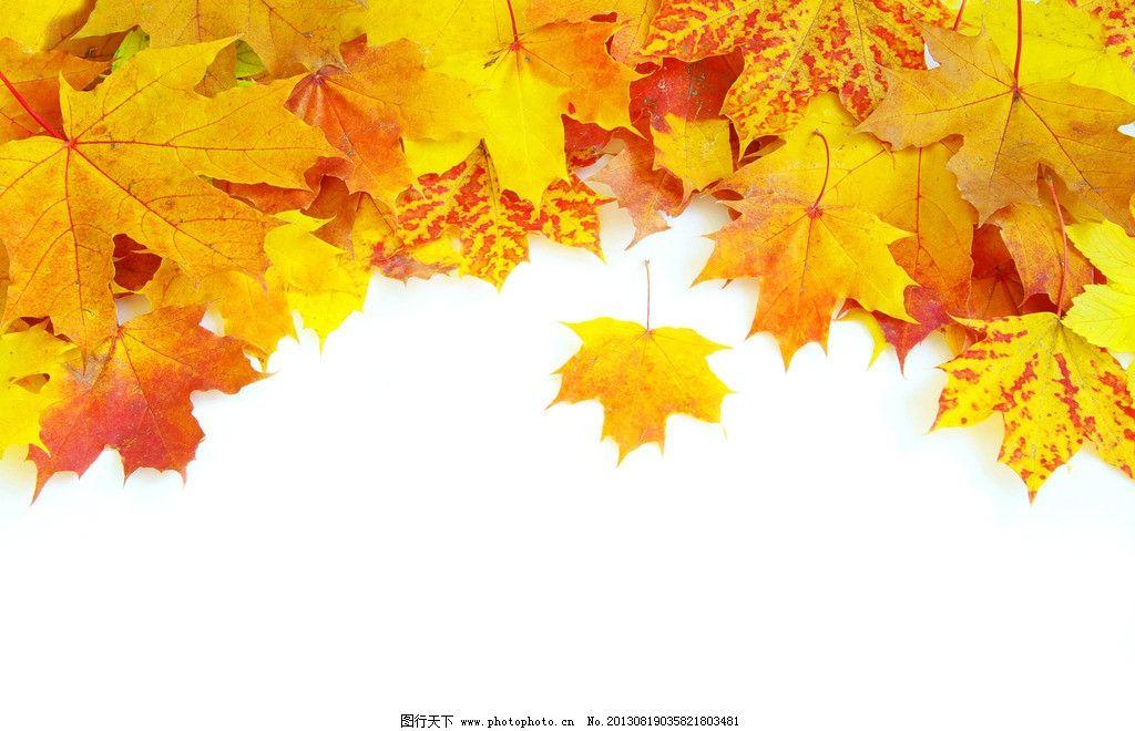 树叶 法桐 落叶 法国梧桐 黄叶 秋天 背景 景观 壁纸 树枝树木树叶绿图片