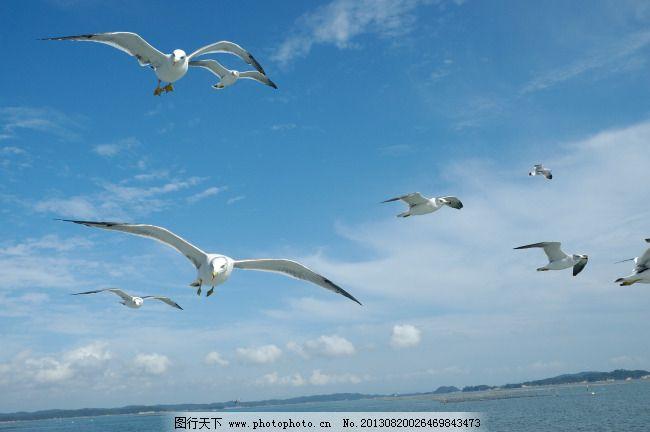 带鸟的风景图片