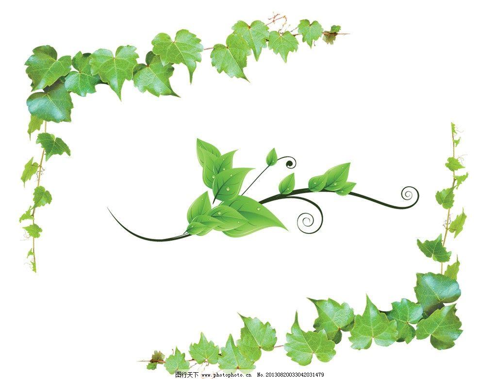 爬山虎 藤蔓 花边 绿叶 绿叶花边 装饰花边 树叶 植物 藤 树藤 psd