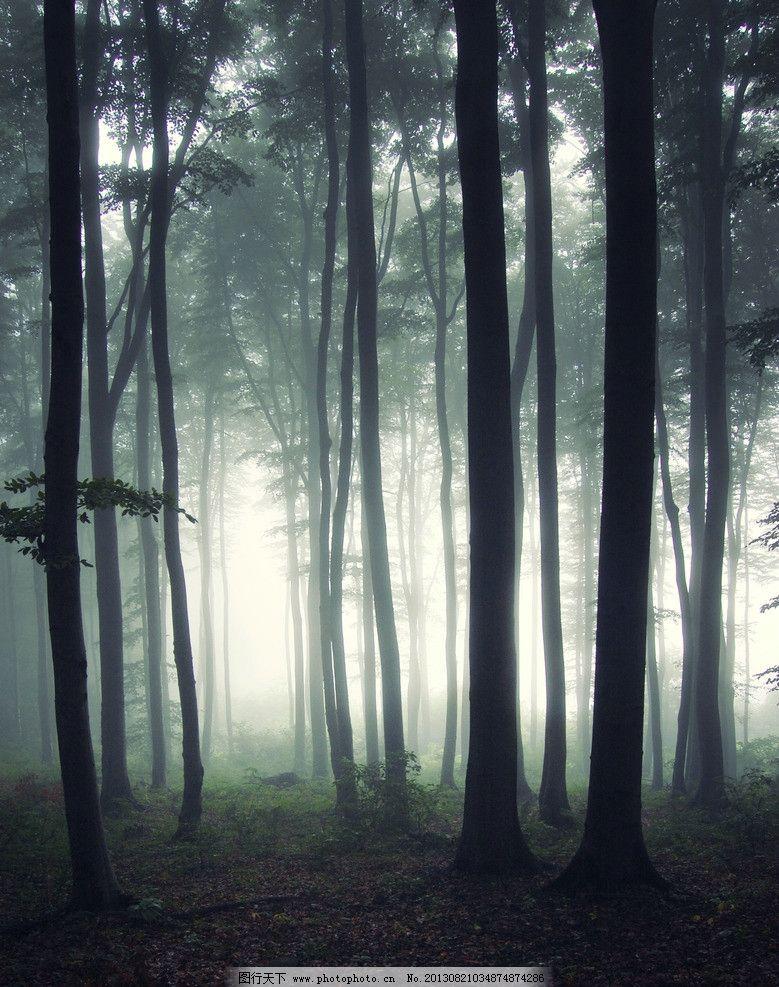 灰暗森林 树林 树木 自然 树干 绿叶 山林 诡异森林 早晨 自然风景