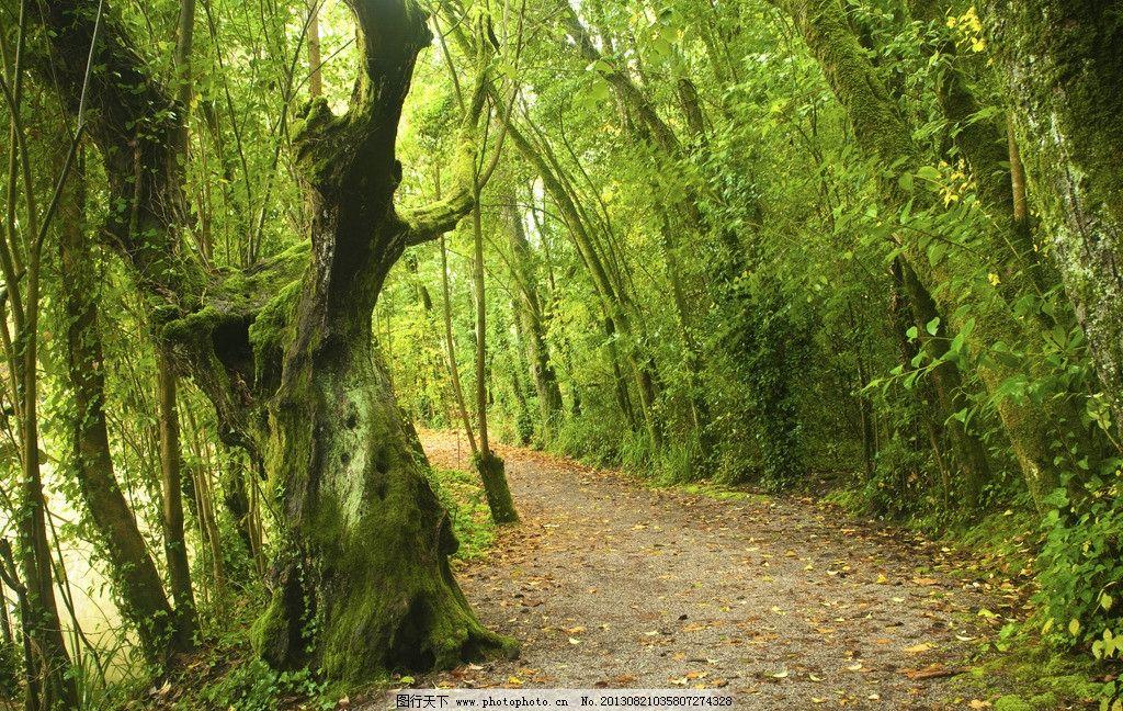 森林 树木 草皮 苔藓 原始森林 绿林 小路 树木树叶 生物世界 摄影