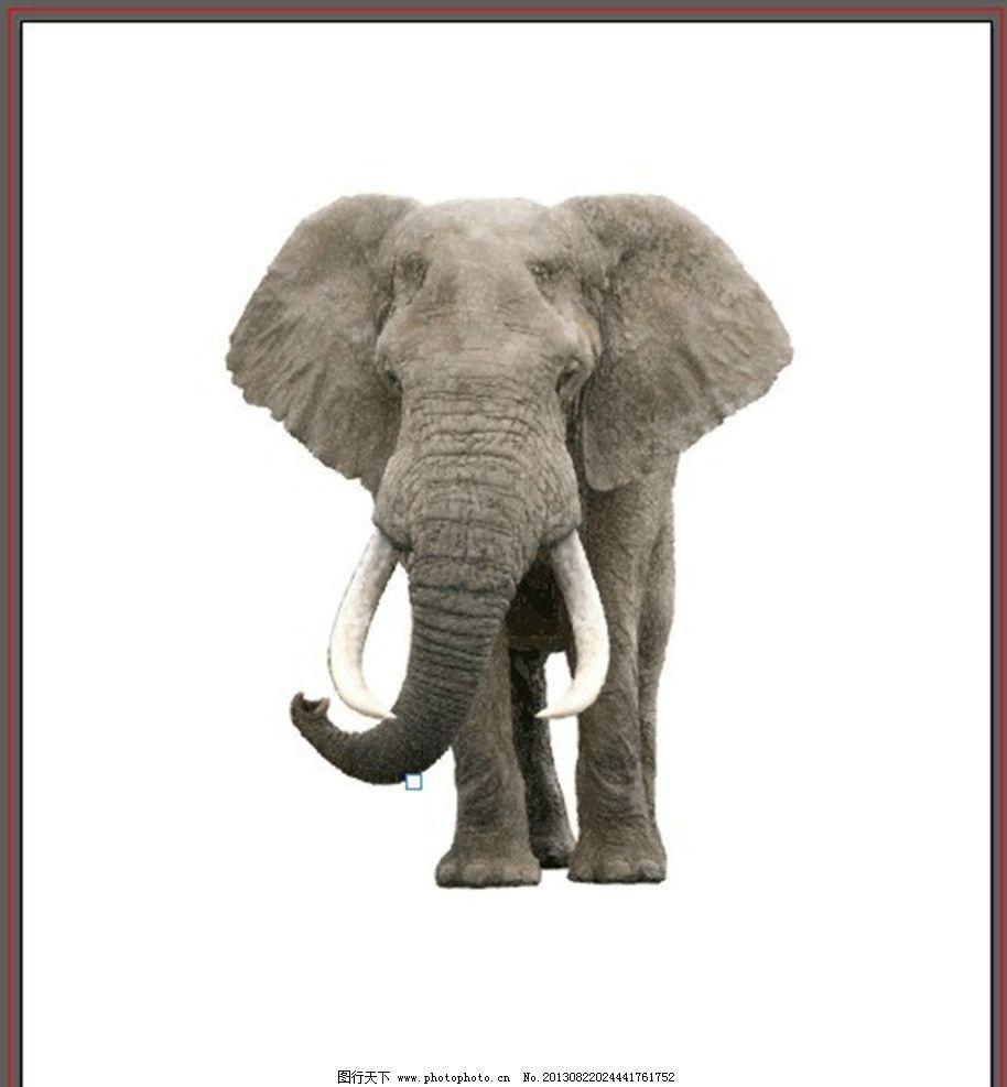 大象 野生动物 动物 大型动物 猛兽 矢量图 生物世界 矢量 ai