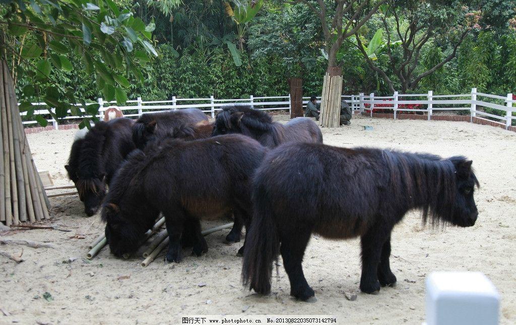 小马野生动物养殖场地址