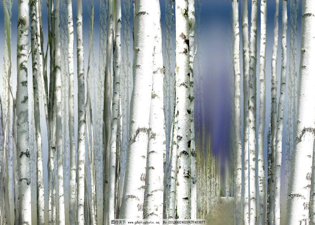 白桦树 无框画图片