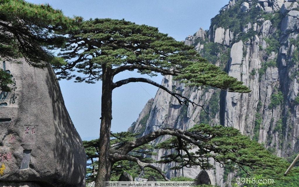 黄山迎客松 安徽 黄山 迎客松 近照 高清 自然风景 旅游摄影 摄影 120