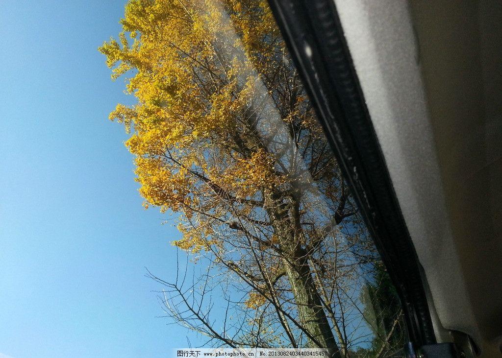 银杏树 树 风景 美丽 山 天空 银杏 秋天 大山里的美丽风景 山水风景