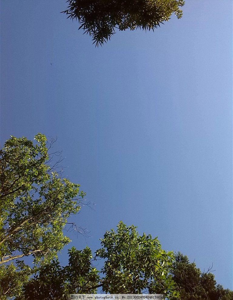 仰望天空 蓝天 天空 蓝色 树木 自然风景 自然景观 摄影 72dpi jpg