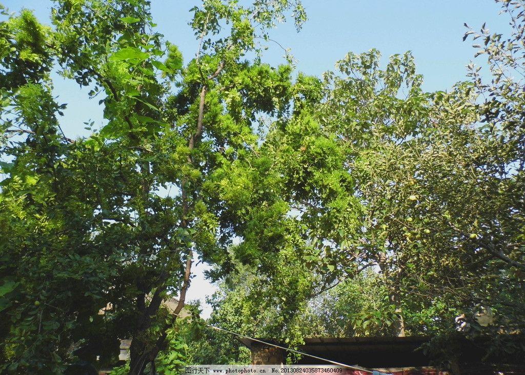 绿色树木 摄影 叶子 绿色 大树 春天 树木树叶 生物世界 96dpi jpg