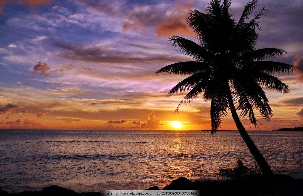 黄昏下的椰树图片_自然风景_自然景观_图行天下图库