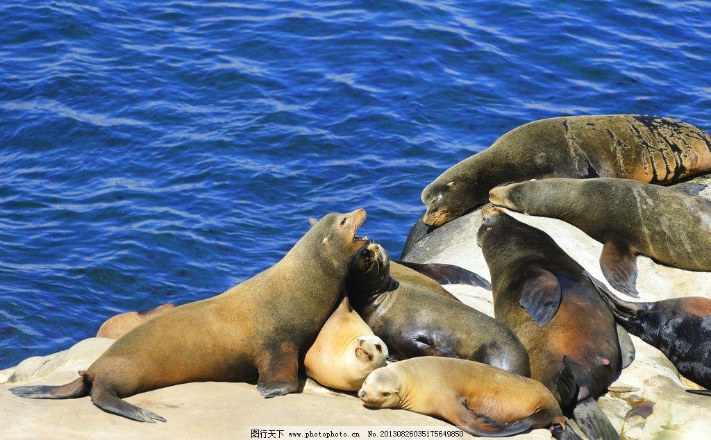海狮 大海 海洋 海岸 野生动物 熟睡 海洋生物 生物世界 摄影 300dpi