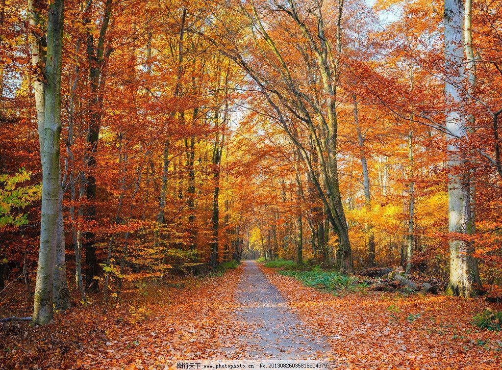 树荫 秋韵 枫叶 枫树 落叶 树叶 自然风景 秋天 树木 壁纸 生物世界
