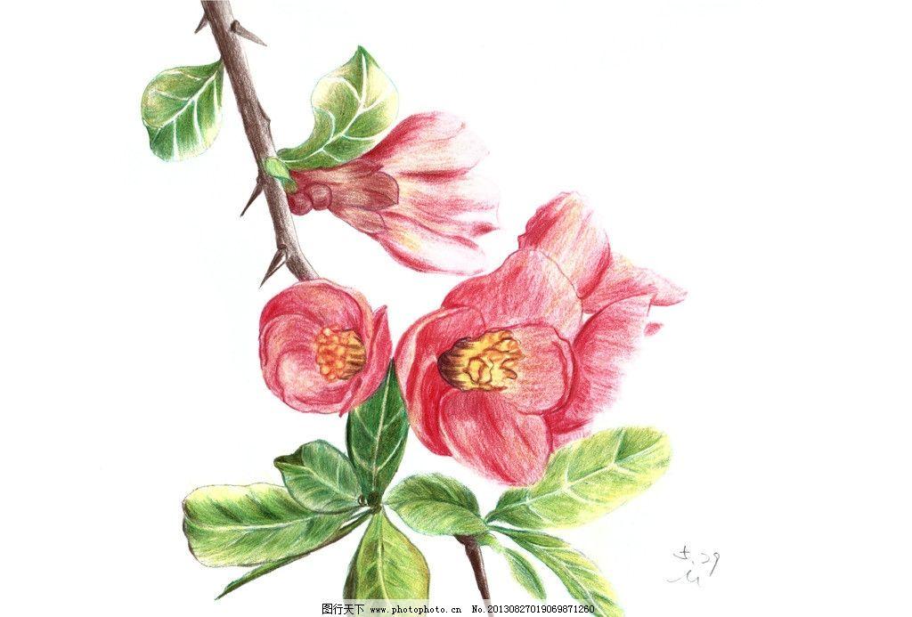 手绘贴梗海棠 手绘 花卉 贴梗 海棠 色铅笔 绘画书法 文化艺术 设计