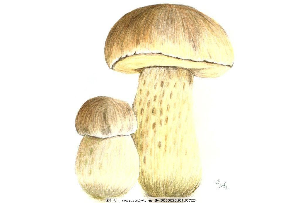 蘑菇 手绘 植物 色铅笔 菌子 绘画书法 文化艺术 设计 300dpi jpg