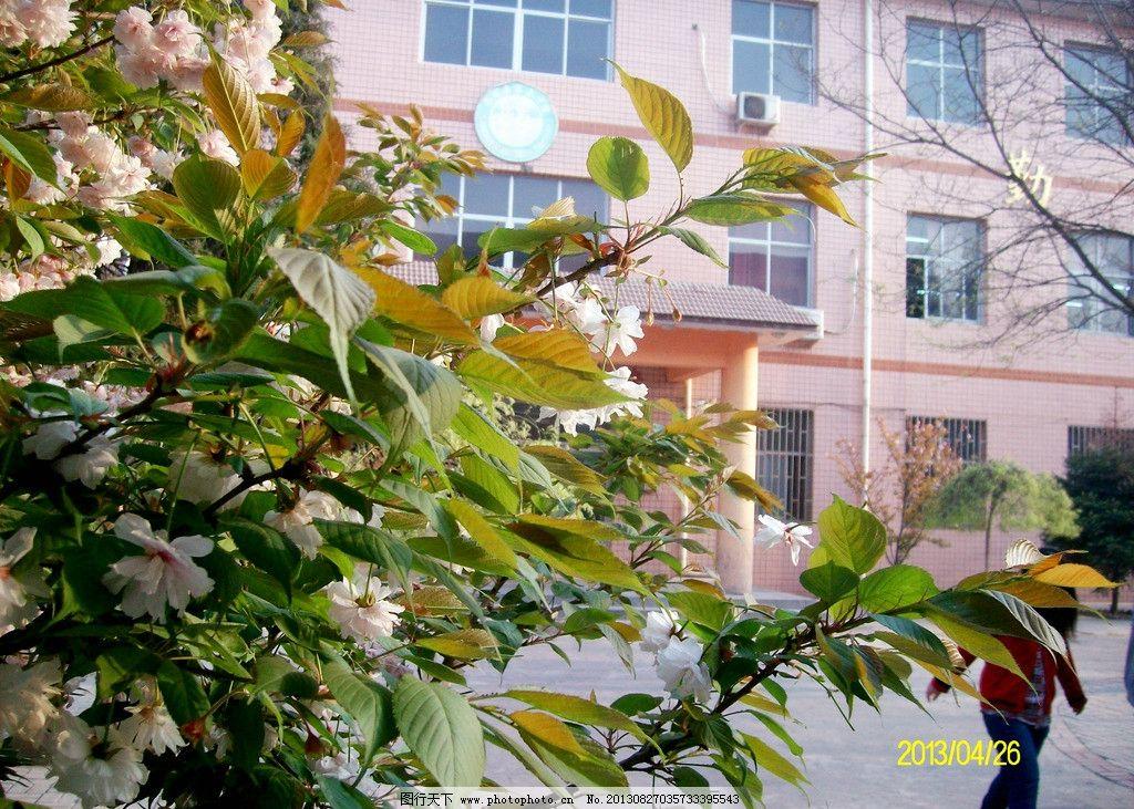 春天的校园图片