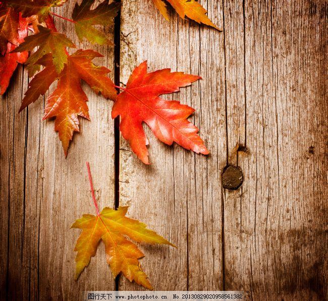 木板上的秋天树叶特写摄影高清图片