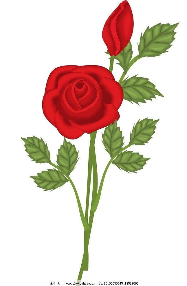 玫瑰花 情人节 红玫瑰 花草 花世界 生物世界图片